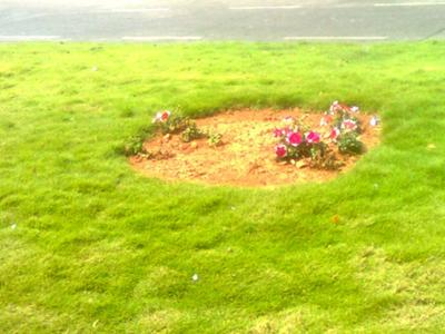 Is this marriage? Flowers amongst life's grassy patches. Pic/Sneha  Subramanian Kanta