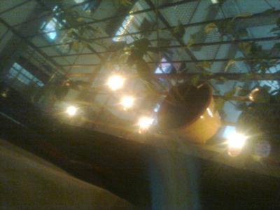 Lamps glittering at Diwali. Pic/Sneha Subramanian Kanta